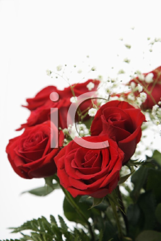 Royalty Free Photo of a Close-up of a Bouquet of Red Roses With Baby's Breath