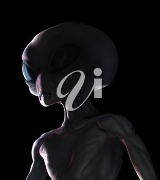 Grey alien night sighting, head and chest