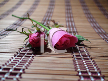 Royalty Free Photo of Rosebuds on a Woven Tablecloth