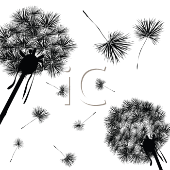 Royalty Free Clipart Image of Dandelions Blowing