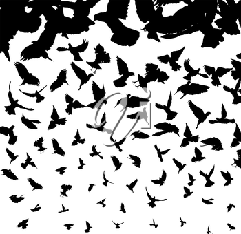 Background illustration with flying bird silhouettes