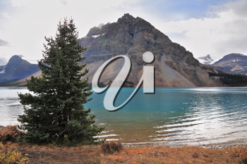 Brilliant turquoise Bow Lake and the picturesque triangular mountain. Early autumn in the Rocky Mountains of Canada.