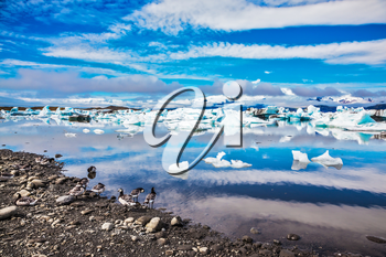 Ice magnificence. Iceland. Floating ice and clouds are reflected in smooth mirror water of the Ice lagoon