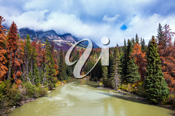 Multicolored autumn forests grow along the banks of the cold river. Heavy storm clouds over the Rocky Mountains of Canada. The concept of active tourism