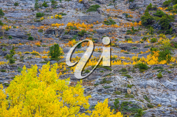 Travel to the Rockies of Canada. Slope of the mountain with green and yellow trees