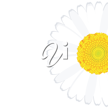 Daisy flower background with place for your text