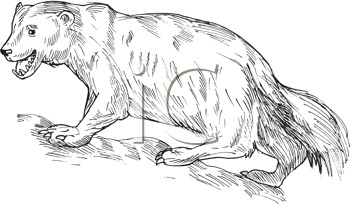 Royalty Free Clipart Image of a Wolverine Sketch