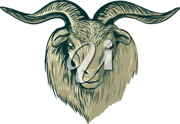 Drawing sketch style illustration of a cashmere goat head viewed from front on isolated background.