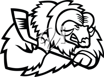 Mascot icon illustration of head of a muskox, musk ox or musk-ox, an Arctic hoofed mammal of the family Bovidae, with ice hockey stick viewed from side on isolated background in retro style.