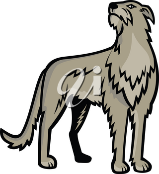 Sports mascot icon illustration of Scottish Deerhound or the Deerhound, a large breed of hound bred for hunting red deer viewed from front on isolated background in retro style.