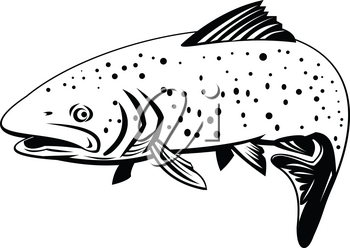 Retro black and white style illustration of a rainbow trout, a trout and species of salmonid native to  the Pacific Ocean in Asia and North America swimming to left on isolated background.