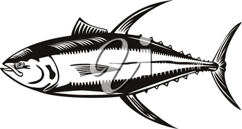 Retro woodcut style illustration of a yellowfin tuna thunnus albacares, a species of tuna found in pelagic waters of tropical and subtropical oceans on isolated background done in black and white.
