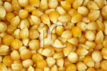 Royalty Free Photo of a Popping Corn