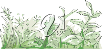 Border Illustration Featuring Different Herbs