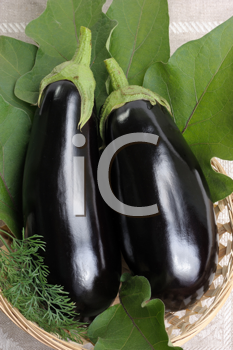 Royalty Free Photo of Two Eggplants in a Basket