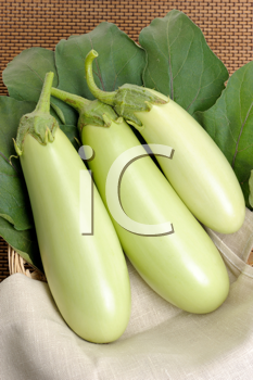 Royalty Free Photo of Green Eggplants