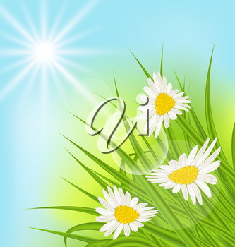 Illustration summer nature background with daisy, grass, blue sky, sunny rays - vector