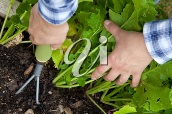 Royalty Free Photo of Hands Gardening