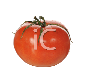 Royalty Free Photo of a Tomato
