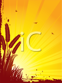 Royalty Free Clipart Image of a Corn Background