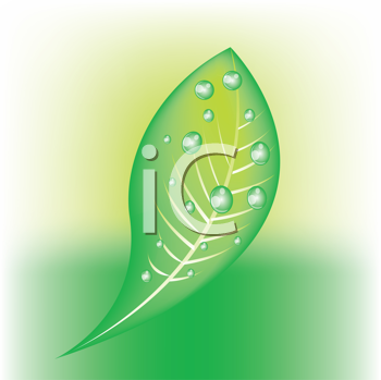 Royalty Free Clipart Image of a Leaf With Water Drops