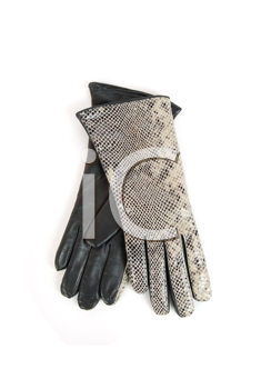 reptile modern leather gloves isolated on a white