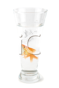Royalty Free Photo of a Goldfish in a Cup