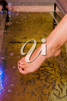 Fish spa pedicure wellness skin care treatment