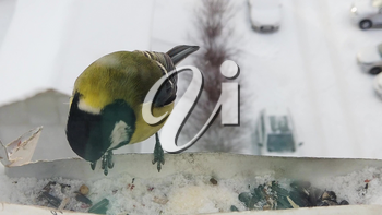 Tits fly to the feeder with seeds. Concept of feeding birds in winter. Feeder on the window of the house. Slowmo video