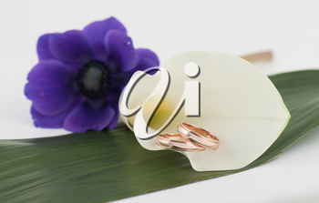 wedding rings on a flower background