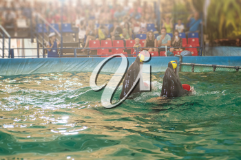 Two dolphins at dolphinarium on performance