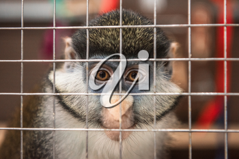 Monkey eye sad expression in a cage in contact zoo