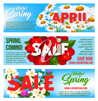 Spring Sale vector banners set with flowers. Springtime holiday shopping promo discount offer design template of blooming spring chamomile daisy, clover bloom and cherry blossom floral petals