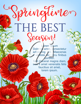 Springtime blooming red flowers design for vector greeting poster. Garden poppy flowers bunches and flourish lily of valley bouquets floral design template for spring time season holidays quotes