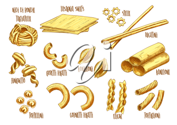 Italian pasta vector sketch set of Italian nidi di rondi or tagliatelle, lasagna sheets and stelle, bucatini and funghetto sort, gobetti rigatti or konkiloni and kanelone or tortellini