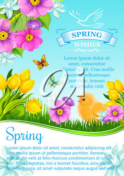 Spring holidays vector greeting card or poster with springtime flowers bouquets. Floral design of blooming tulips, crocuses or daffodils, lily blossoms and narcissus with butterflies and chick on sunn