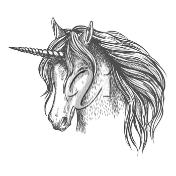 Unicorn head sketch. Mythic fantasy equine creature. Heraldic mustang head with long horn and wavy mane. Vector sketch symbol of fantastic fairy horse for astrology, fairytale story design