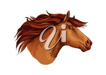 Horse or brown racehorse stallion head. Running vector arabian mustang trotter or racer sketch symbol for equine sport races or rides, equestrian racing contest, exhibition or horserace