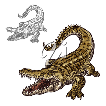 Crocodile alligator sketch vector icon. Sea or river predatory reptile animal species. Isolated fauna and zoology symbol or emblem for fishing club or fishery seafood market