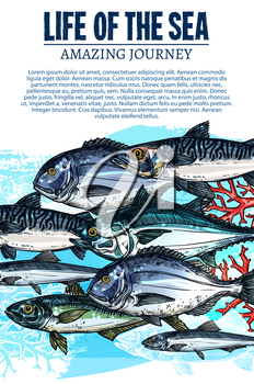 Fish and sea life poster of underwater fishes. Vector sketch ocean flounder, salmon or pike and sprats, marlin or carp and herring with mackerel or navaga flock, river sheatfish and pikeperch