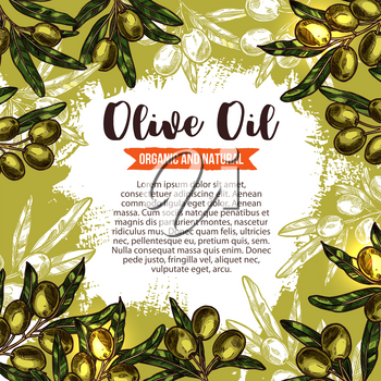Olive oil sketch poster with olive branch frame. Olive tree wreath of green fruit and leaf with ribbon banner for organic natural food packaging and oil bottle label, mediterranean cuisine design