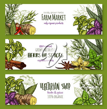 Herbs and spices sketch banners for farm market or seasonings shop. Vector design template of chili pepper spice and oregano or basil, dill or parsley flavoring and thyme or cumin and bay leaf