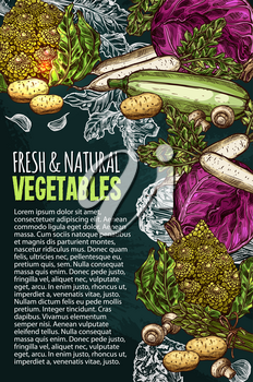Vegetables and natural fresh veggies sketch poster for farm market. Vector cabbage, potato and cucumber or cauliflower, organic zucchini or avocado and carrot or radish and tomato, pumpkin and garlic