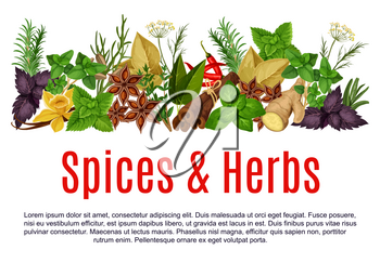 Herbs and spices store poster design template. Vector organic thyme, rosemary or basil and horseradish spice, farm chili pepper or anise and oregano cooking seasonings, dill or parsley and sage