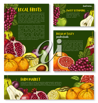 Farm fresh fruits sketch banners and posters for fruit shop. Vector garden apple, plum or pear and exotic avocado, grape or lemon and tropical citrus orange or grapefruit and pomegranate garnet