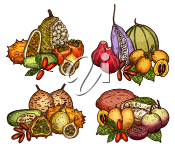 Exotic and tropical fruit bunch sketch. Date and miracle fruit, cantaloupe, kiwano and persimmon, grenadilla, marang and akebia, mamme and star apple, gandaria, loquat and cupuassu, chambakka and bael