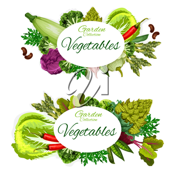 Vegetable, beans and culinary herbs vector posters of organic farm veggies. Chili pepper, broccoli and cabbage, garlic, pea and zucchini, asparagus, squash and beet, romanesco cauliflower and arugula