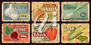 Farm vegetable rusty plates of vector bell pepper, onion, garlic, corn and beet with green leaves, husk and cloves. Vintage tin signboards with fresh organic veggies, farmer market and grocery design