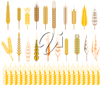 Set of icons of ripe golden ears of wheat and cereals conceptual of farming, agriculture and staple foodstuffs, vector design elements