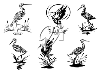 Stork, heron, crane and egret birds vector illustrations in black and white side view showing the birds wading in water